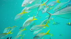 Pov snorkeling in clear water, fish in sea Stock Footage