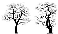 Silhouettes of old trees over white background. - stock illustration