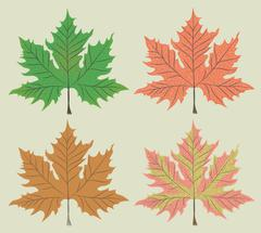 Maple leaf vector - stock illustration