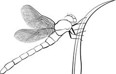 Stylized predatory  insect dragonfly isolated on white Stock Illustration