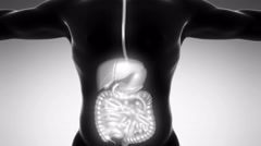 Stock Video Footage of science anatomy of man body with glow digestive system on white