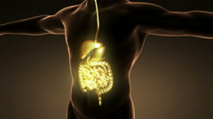 Stock Video Footage of science anatomy of man body with glow digestive system