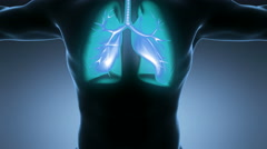 Loop science anatomy of man body with glow lungs on blue Stock Footage