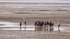 Trip in the mudflat of the North Sea Stock Footage