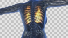 Loop science anatomy of human body in x-ray with glow lungs on blue. alpha ch Stock Footage
