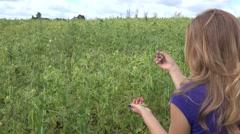 Blond villager farmer woman pick ripe peas pods in farm plantation. 4K Stock Footage