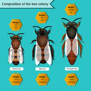 Informative poster on the composition of the bee colony Stock Illustration