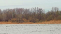 Riverbank covered with bare trees and group of tourists walking along Stock Footage