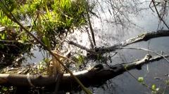 Establishing Swamp Shot below Reed College Stock Footage