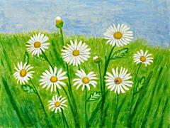 White daisies Stock Illustration