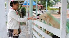 Asian girl feeding milk bottle the goat in farm. Stock Footage