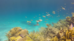 Lively coral reef Stock Footage