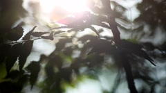 Sunlight through tree leaves in summer day. Beautiful sun flare with tree leafs Stock Footage