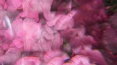 Artistic effect of garden and summer vacations seen through a prism and distorte Stock Footage