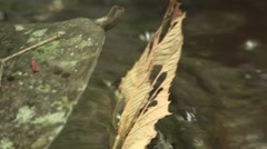Small waterfall river flowing naturally over rocks close up Stock Footage