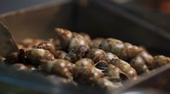 Chinese shells for cooking and food ingredient. Stock Footage