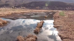 A beautiful aerial shot ducks flying over pond Stock Footage