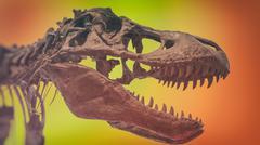 Tyrannosaurus Rex Skull Color Background - stock photo