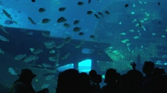 People watch fish in the Singapore Aquarium in Singapore, Singapore. - stock footage