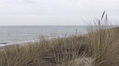 Marram grass blowing in the wind Stock Footage