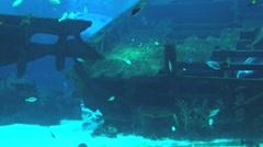 Fish moves in the large aquarium in Singapore Aquarium in Singapore. Stock Footage