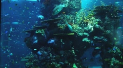 Coral reef with tropical fish in Singapore Aquarium, Singapore. Stock Footage