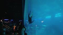 People visit Singapore Aquarium in Singapore, Singapore. - stock footage