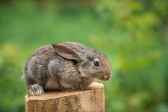 Rabbit. Beautiful animal of wild nature - stock photo