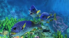 Tropical fish with colorful reef in the large aquarium in Singapore. Stock Footage