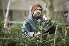 A man in winter hat and waterproof jacket handling a tall Christmas tree. - stock photo