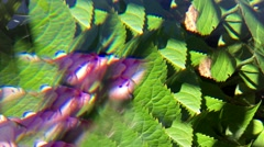 Artistic blurred petals throught prism light effect. Stock Footage