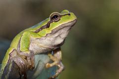Green sitting frog Stock Photos