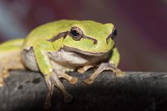 green sitting frog - stock photo