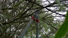 Close up of tool cutting branch Stock Footage