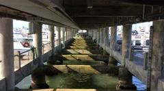 Water Under Bridge. Stock Footage