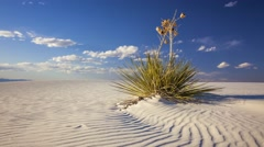 Yucca Plant on Sand Dune at White Sands National Monument - Timelapse Stock Footage