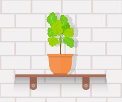 Houseplant Design Flat Concept - stock illustration