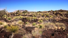 Lava Landscape at Valley of Fires Recreation Area in New Mexico Stock Footage