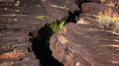 Fault in the Lava at Valley of Fires Recreation Area - New Mexico - stock footage
