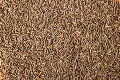 Caraway seeds background Stock Photos