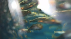 Fishes crammed in small aquarium swimming. Stock Footage