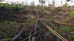Tropical rainforest cleared for slash and burn agriculture Stock Footage