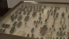 Pinned Insects Panel Stock Footage