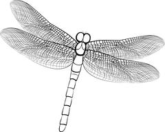 illustration sketch of a dragonfly isolated on white - stock illustration