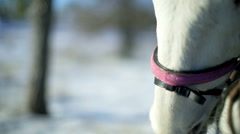 Horses on snow pasture in winter Stock Footage
