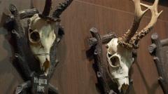 Deer Skulls on Wall Stock Footage