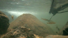 Pool beneath a rainforest waterfall with small fish Stock Footage