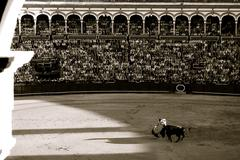 Black and white matador and bull in bull fight Spain Stock Photos