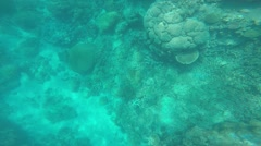 Great barrier reef coral scuba diving fish sand Australia - stock footage