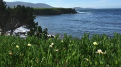 Pebble beach hole 4 flowers looking at hole 6 pacific ocean golf course Stock Footage